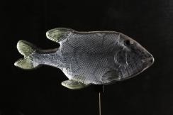 f15 FOSSIL FISK 29cm