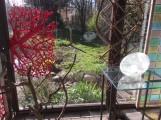 trädgård 2020 2